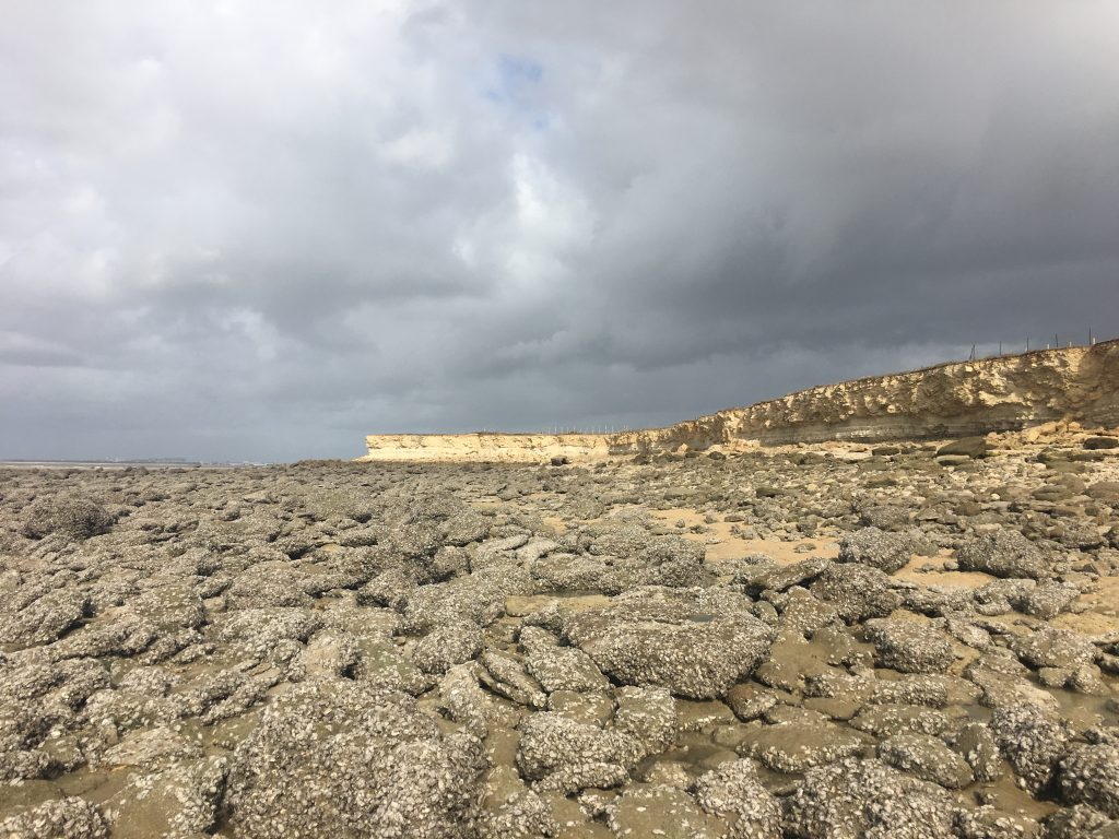 Oysters Long Beach Ca Sea