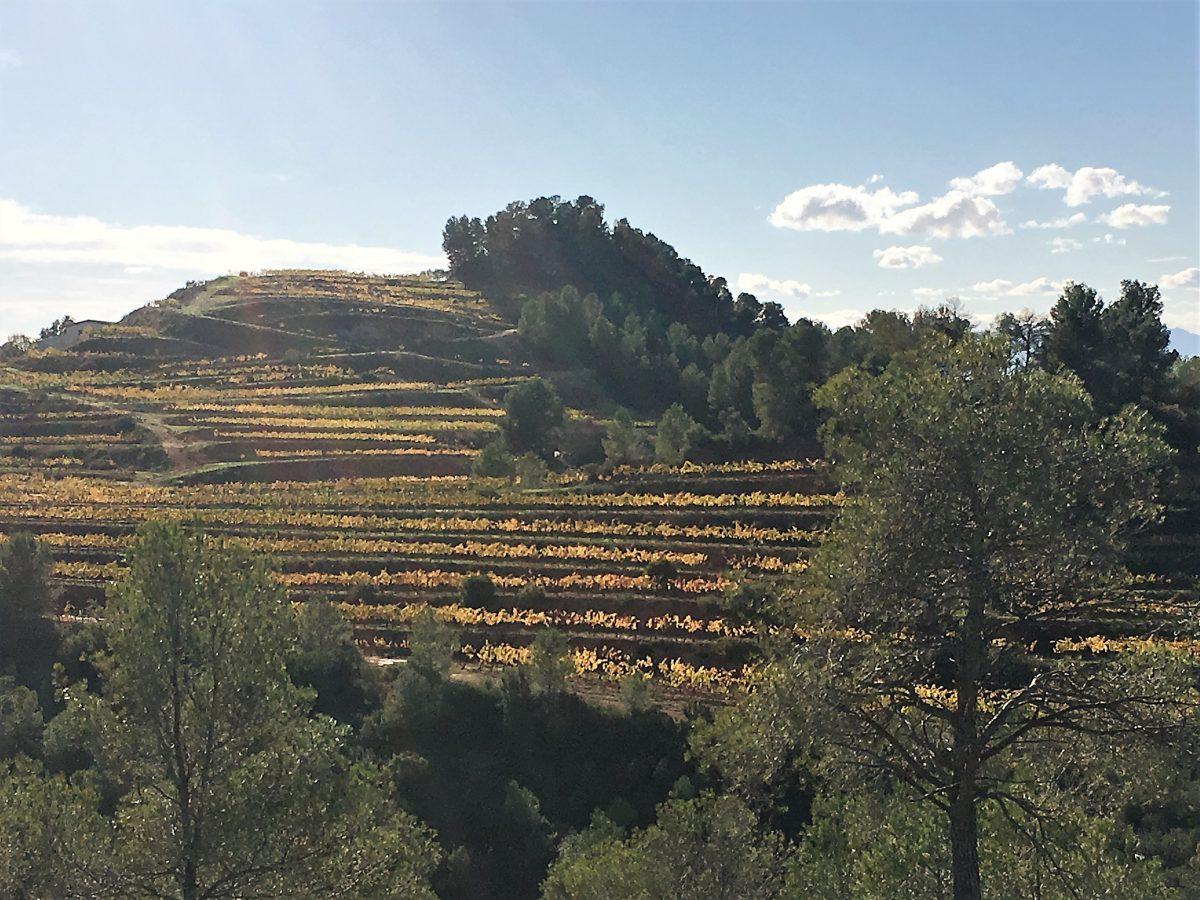El Masroig – Wine and Walking